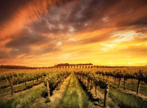 Farm and Crop Insurance Adelaide